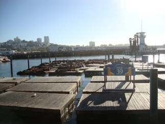 The loud and smelly sea lions at Pier 39!