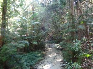 Rainforest hike on Fraser!