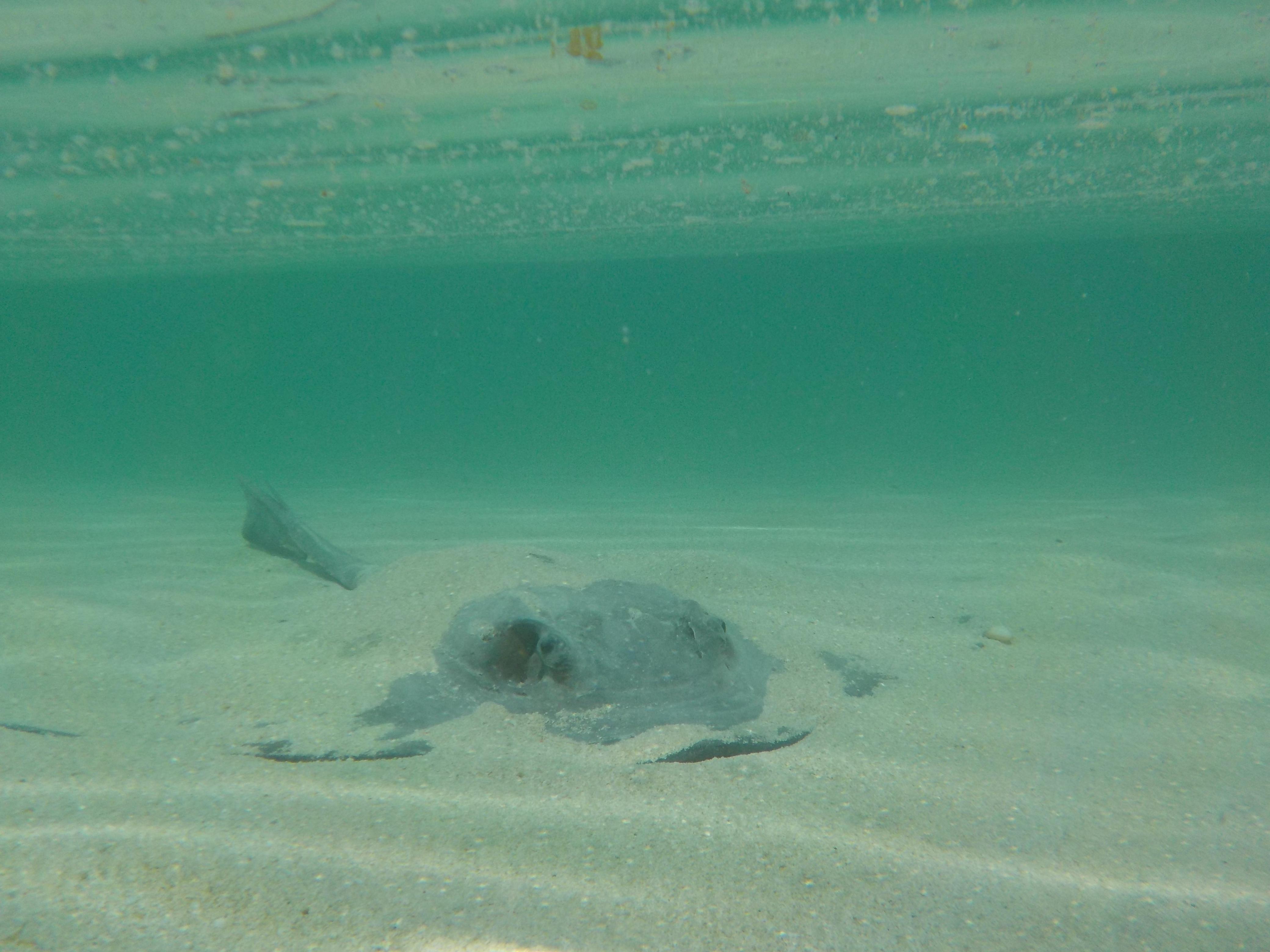 Heron Island Shark Bay