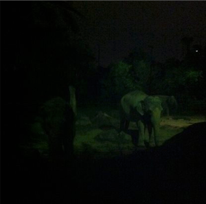 There are actually two elephants there