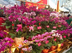 Orchids on Orchids