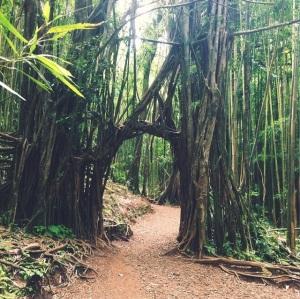 Manoa Falls Hike