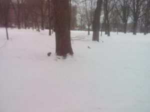 Adorable, sociable squirrels frolicking around in the snow