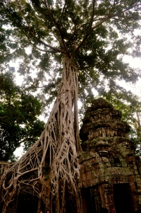 After seeing so many gold temples, theAngkor Wat temples were refreshingly beautiful,blending in so well with nature