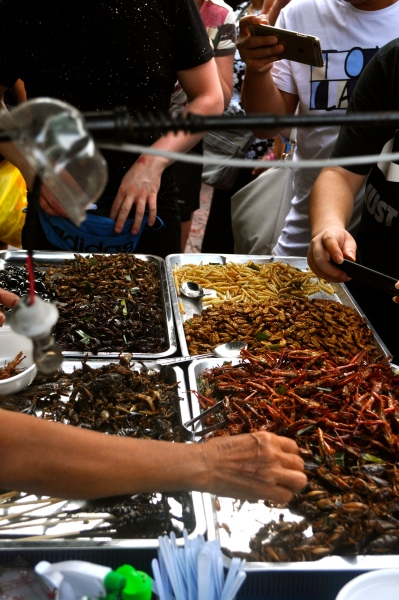 Fried insects in Chinatown