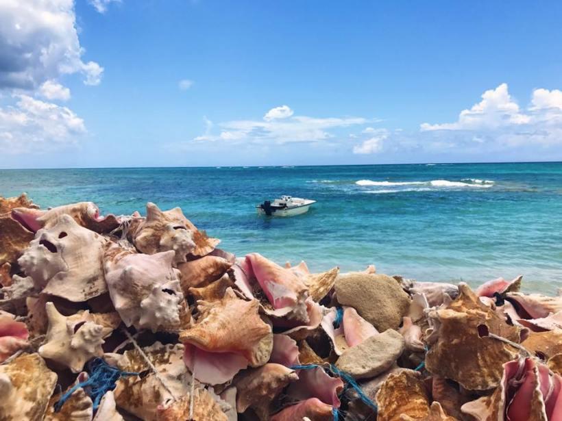 bahama shells